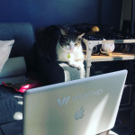 marketing agency cats